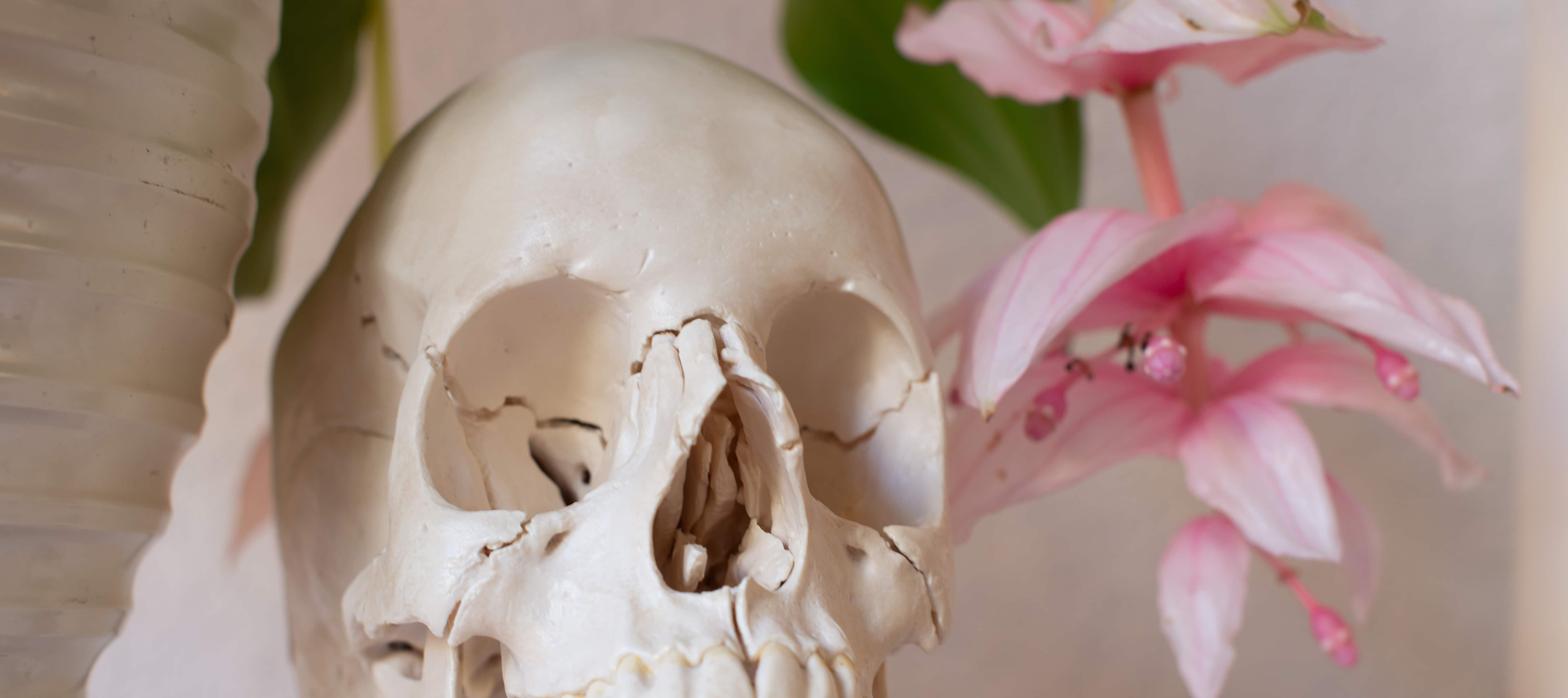 Schädel Kopf